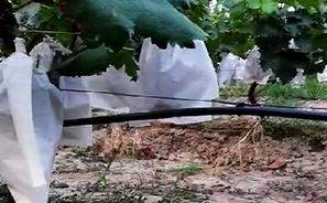 泾阳天井葡萄园项目